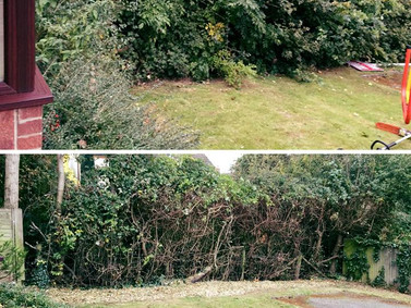 Hedge tidy up done by the team on Friday.