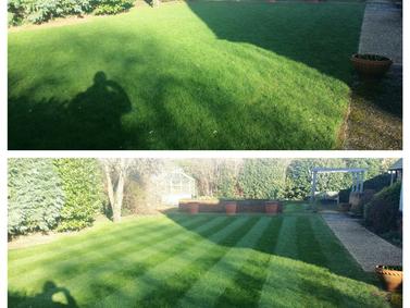 Garden Maintenance: February 2016 (3)