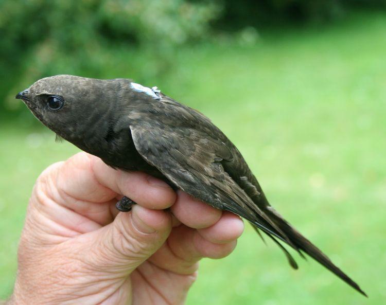 Swift in hand
