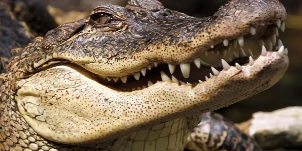 """Annual lunch followed by """"Crocodiles. Someone has to like them"""""""
