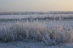 Aklavik Frost (JMosher).JPG