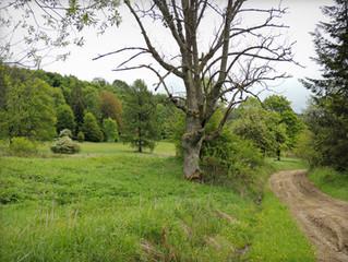 Czertyżne: wieś, której nie ma, czyli transmutacja utopii w atopię
