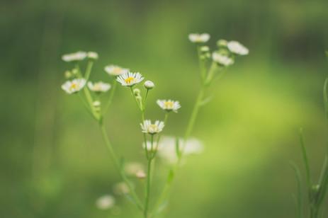 Top Three Herbs for Restful Sleep