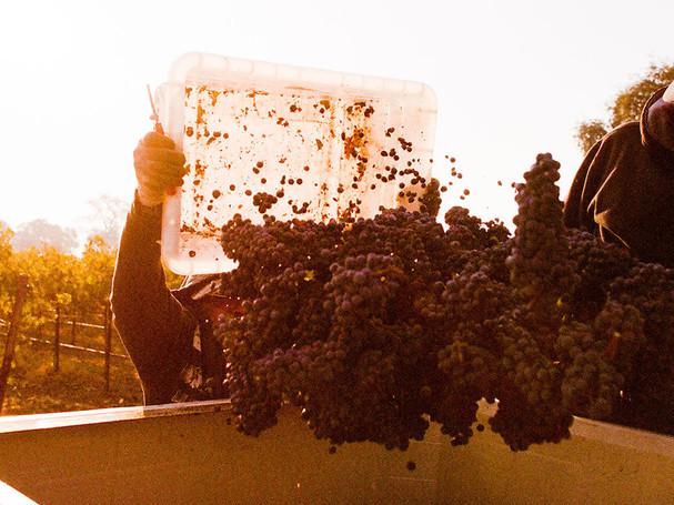 gwco-home-carousel-grape-dump.jpg
