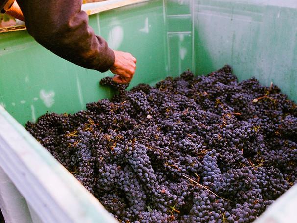 gwco-home-carousel-tub-o-grapes.jpg