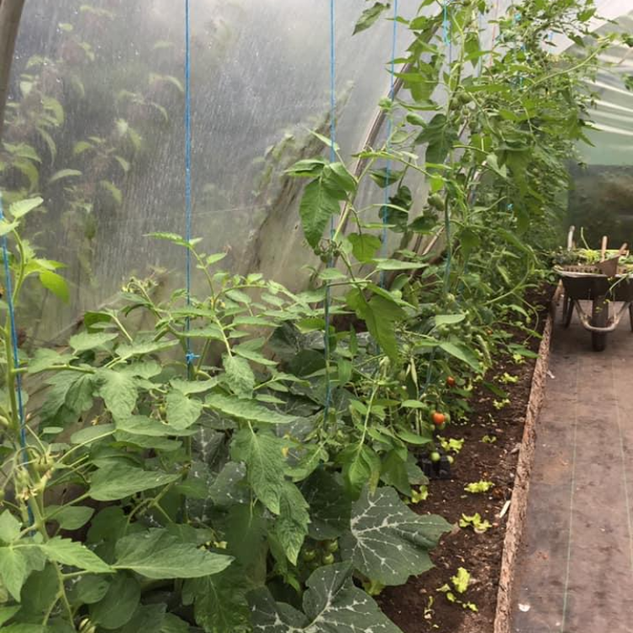 Community Garden Polytunnel