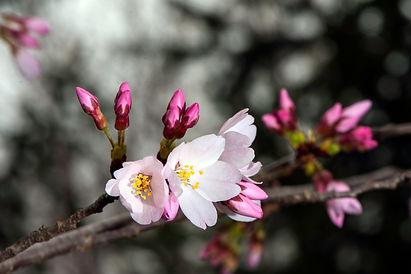 spring-blooms-2a.jpg