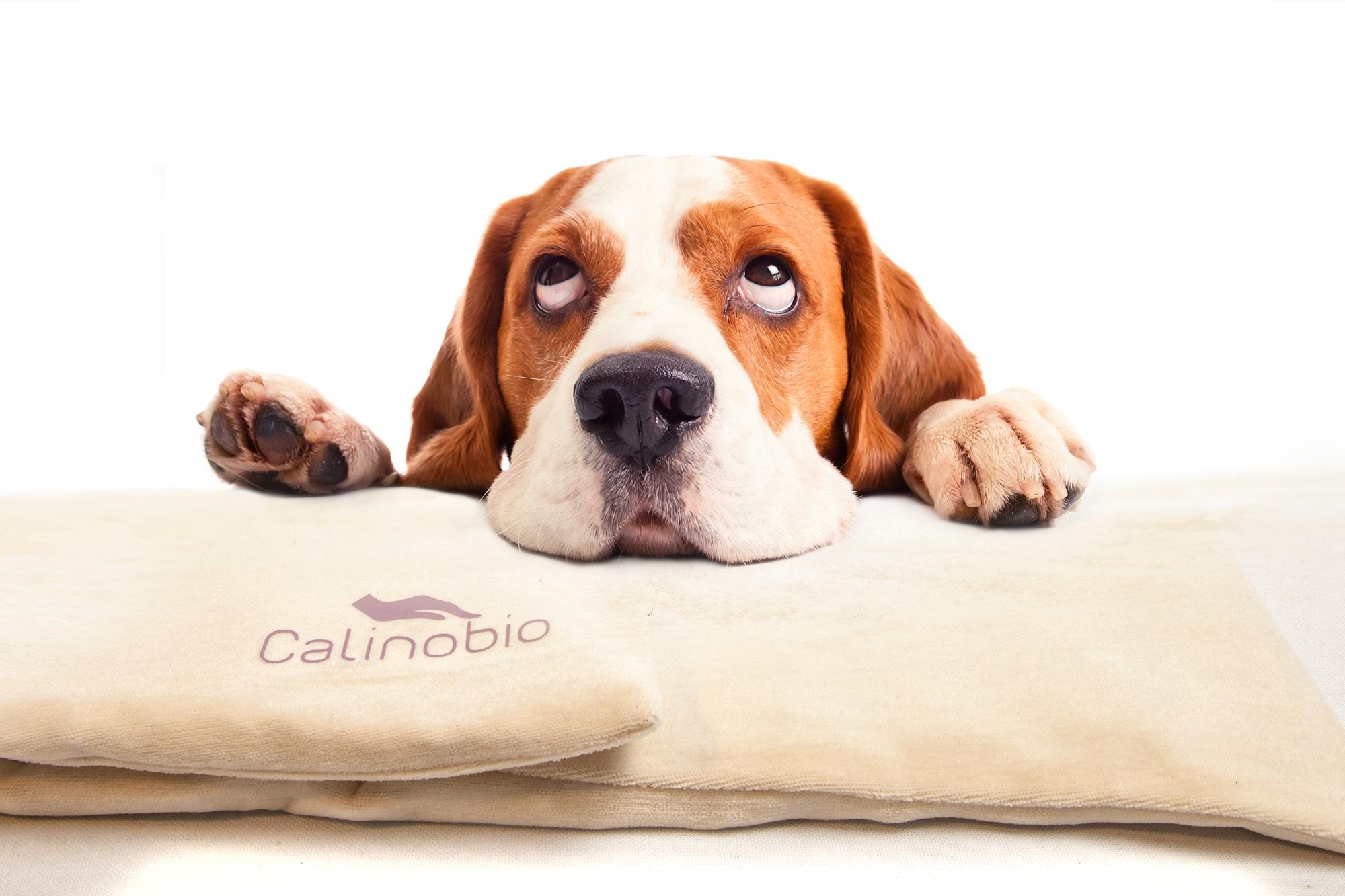 Calinobio, tapis chiens et chats