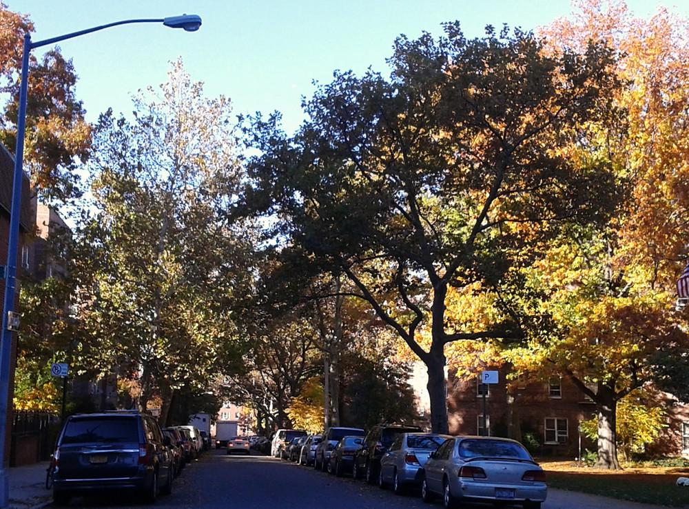 11月のクイーンズのストリート