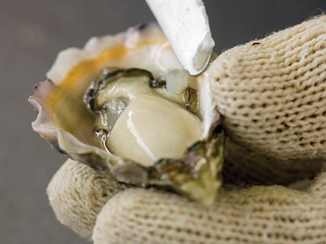 OCEAN FOODS INTERNATIONAL