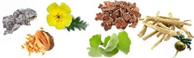 עדנה- מאמר סטרס- צמחים אדפטוגניים לטיפול
