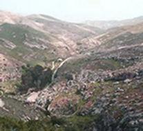 ארטמיסנין בר במדבר יהודה.jpg