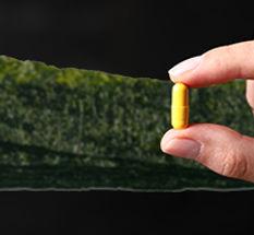אצות ים עשירות ביוד או תרופות