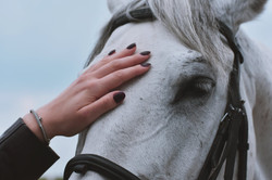 Wakacje w siodle - obóz jeździecki