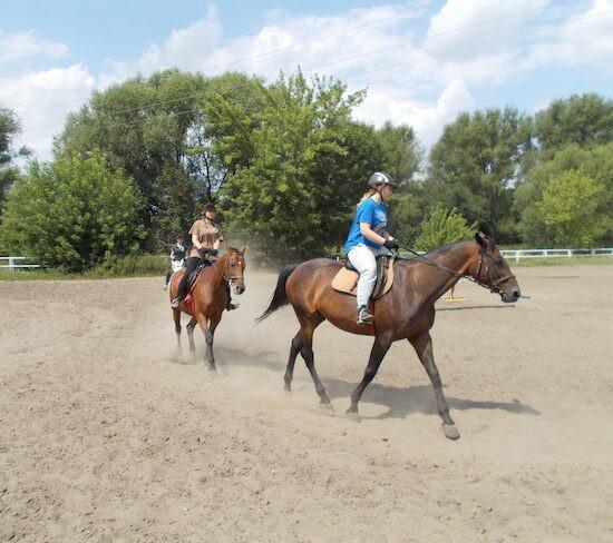 konie-11-550x488.jpg