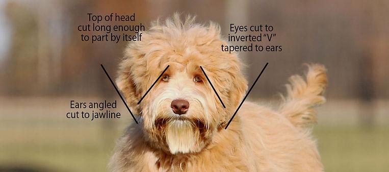 Grooming head.jpg