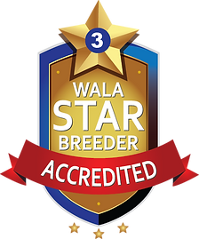 WALA Star Program.4 only.png