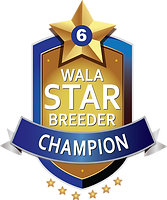 Star Logo.Champion Final.png