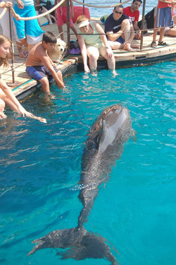 Kids at Dolphin Reef