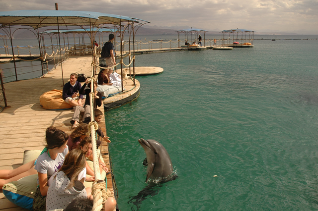 Dolphin Reef walking docks