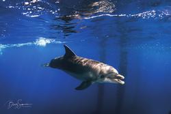 Dolphin in Eilat