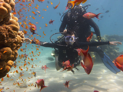 Introduction Dive in the Vibrant Taba Reef