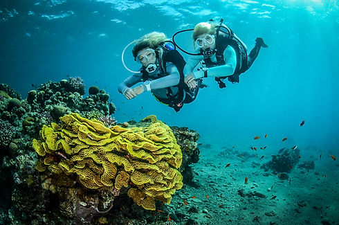 Divers with Yellow Coral
