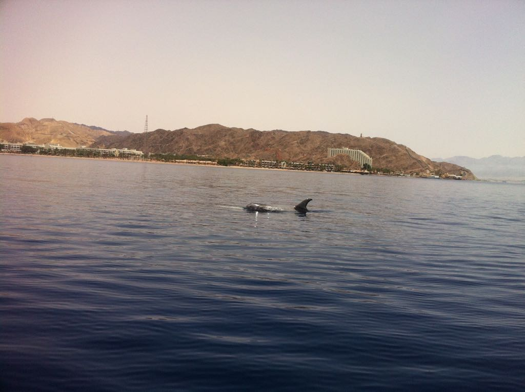 Dolphin from the Boat