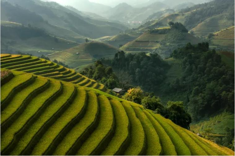 Sauver la beauté du monde. Ici des rizières au Vietnam © Getty / Jakkree ThamJakkree Thampitakkullpitakkull
