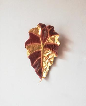 Vanitas day 1, alocasia polly leaf, 2020