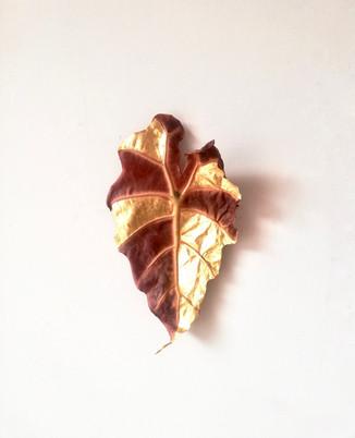 Vanitas day 3, alocasia polly leaf, 2020