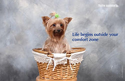 Life begins outside your comfort zone_WE
