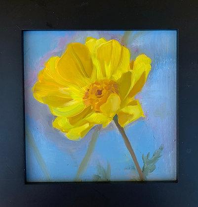 Sunlight Flower