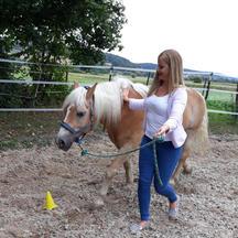 Bodenarbeit an meinen Pferden
