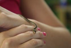 baby+snake.jpg