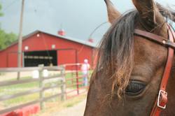 chestnut+horse.jpg