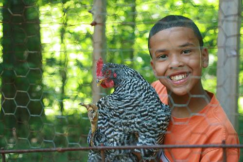 boy+with+chicken.jpg