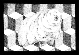Tardigrade (Water Bear).jpg