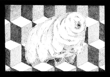 Tardigrade (Water Bear).jpg