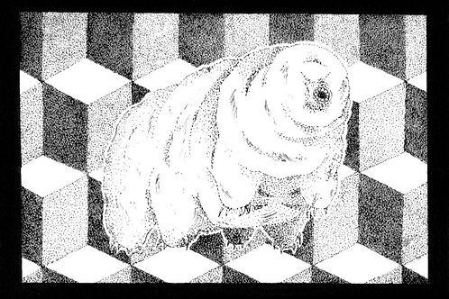 Tardigrade [Original Drawing]