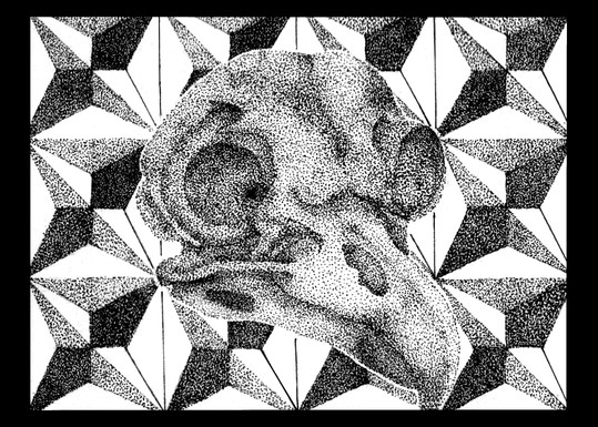 bird skull 5x7.jpg