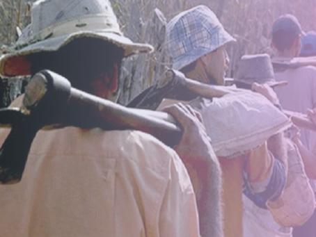 28 de janeiro - Dia Nacional de Combate ao Trabalho Escravo