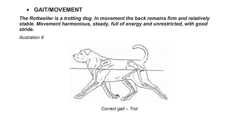Gait and movement