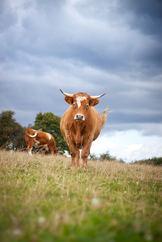 Farming Photography