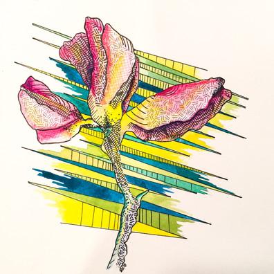 Hello Spring - Tulip