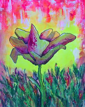 Hello Spring - Sunset Tulips