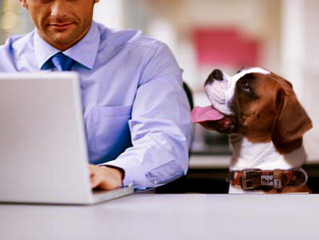 History of Take Your Dog to Work Day