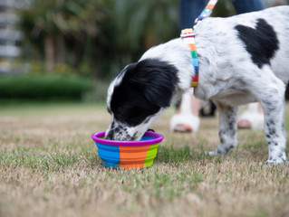 Tips to keep Dog's skin and Fur healthy