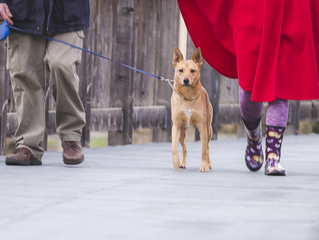 What Are The Types Of Dog Leashes