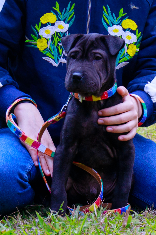 mr licks dog leather dog leash